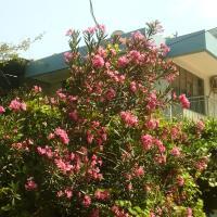 Wind Heaven Garden