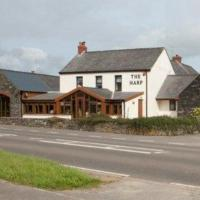 The Harp at Letterston