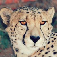 Zanchieta Guest & Wild Cat Farm