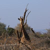 Omulu Safaris Residence