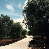 Fikus - the Apulian B&B