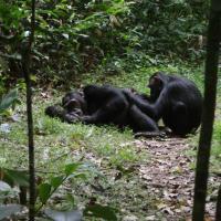 Ecolodge Uganda Campsite