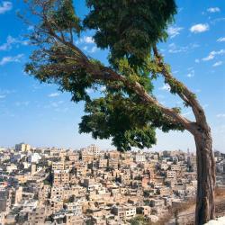 Amman 619 khách sạn