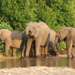 Karongwe Game Reserve 5 hotéis
