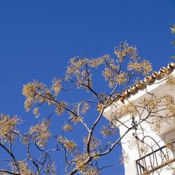 Mejores hoteles y hospedajes cerca de Carratraca, España