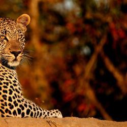 Timbavati Game Reserve 14 hotéis