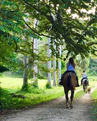Mountain Equestrian Trails