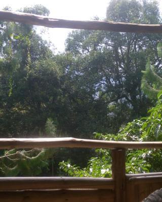 Broadbill Forest Camp Ruhija