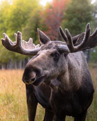 Moose Garden