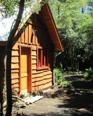 Bosque de Pucon