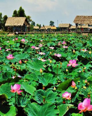 Hai Lua Homestay (Lotus Lake Homestay)