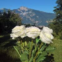B&B White Rose