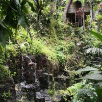Jungle Dream